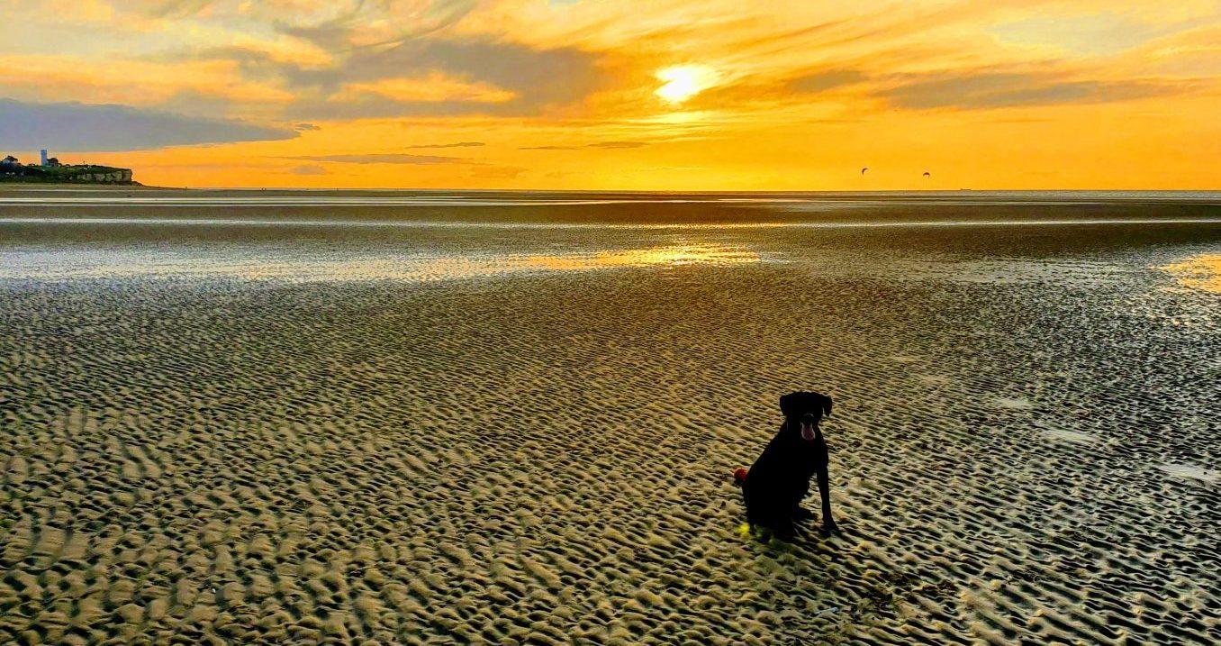 Dog Friendly Norfolk Coast