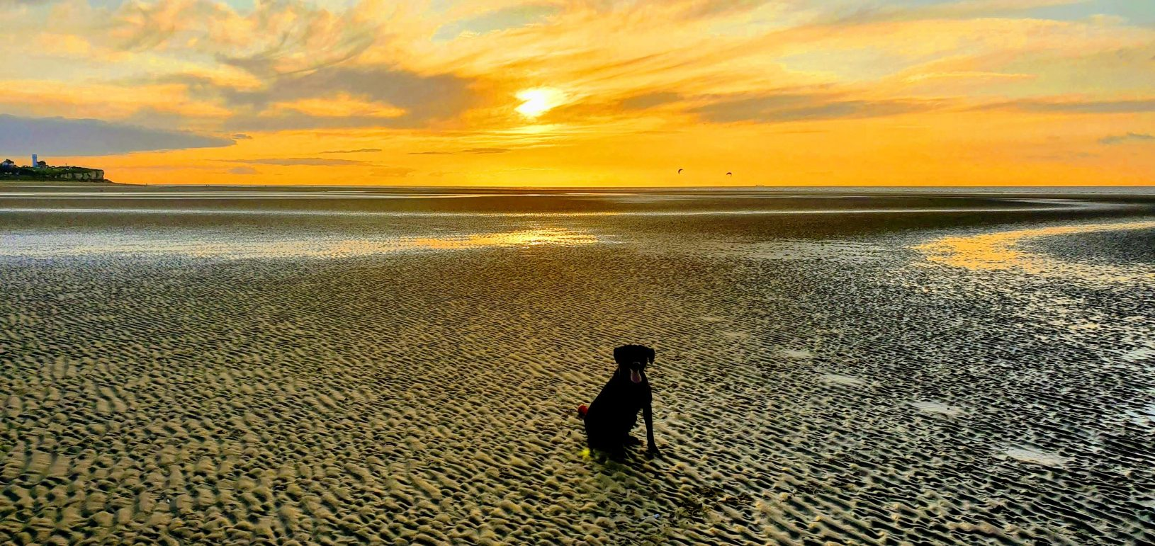 Dog Friendly Thornham Norfolk